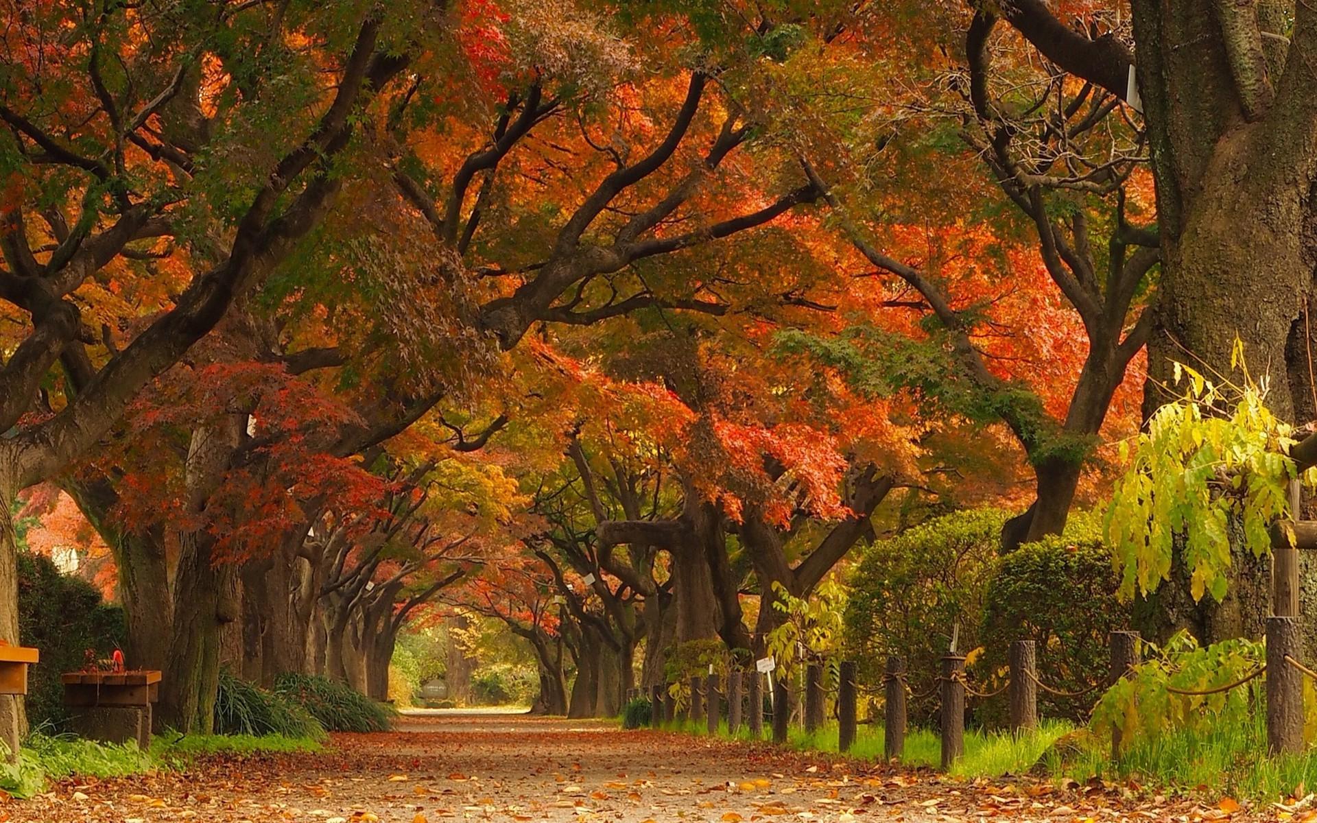 Hüzün Mevsimi şiirleri, Hazan Şiirleri, Sonbahar şiirleri,hüzünlü şiirleri, Yaprak Dökümü şiirleri, Duygusal şiirler,Aşk Şiirleri